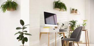 bureau plant en kantoorplanten voor een betere productiviteit