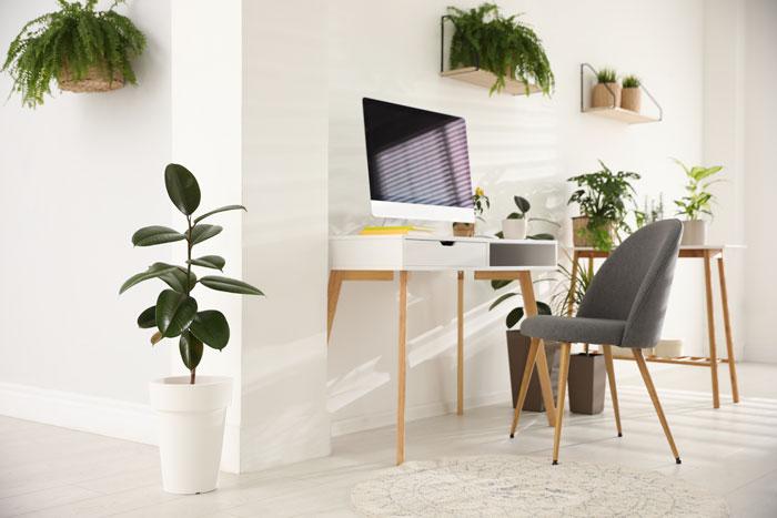 bureau plant, kantoorplanten voor een betere productiviteit