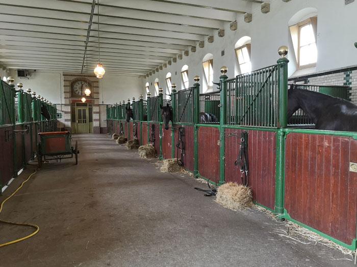 paarden van paleis t loo