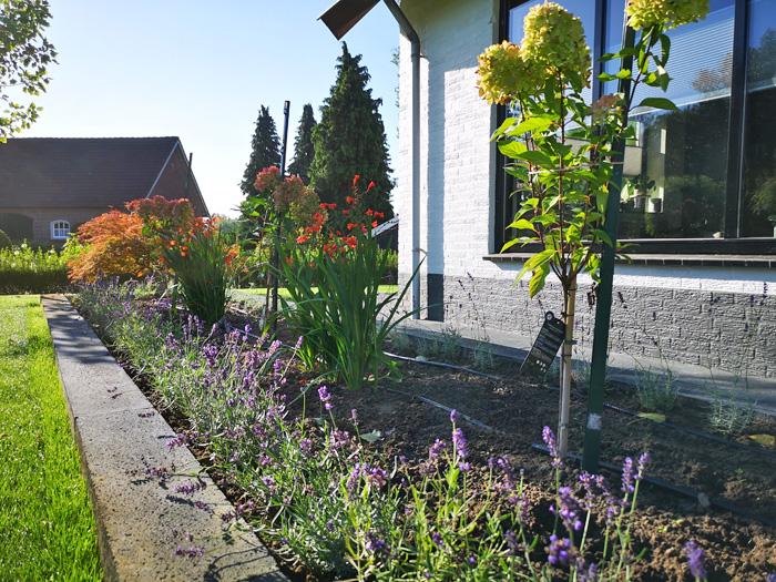 welk seizoen is het beste om nieuwe planten te planten en te verplanten