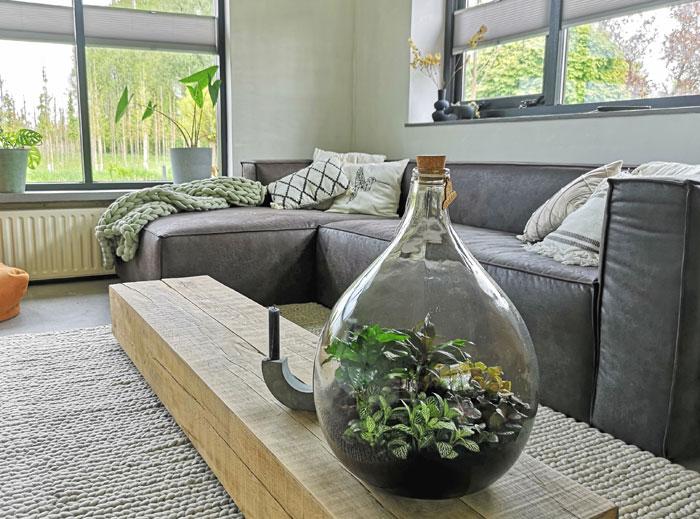 mini ecosysteem in glas