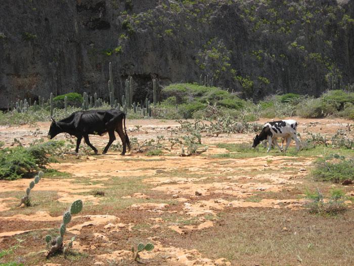 natuurgebied curacao