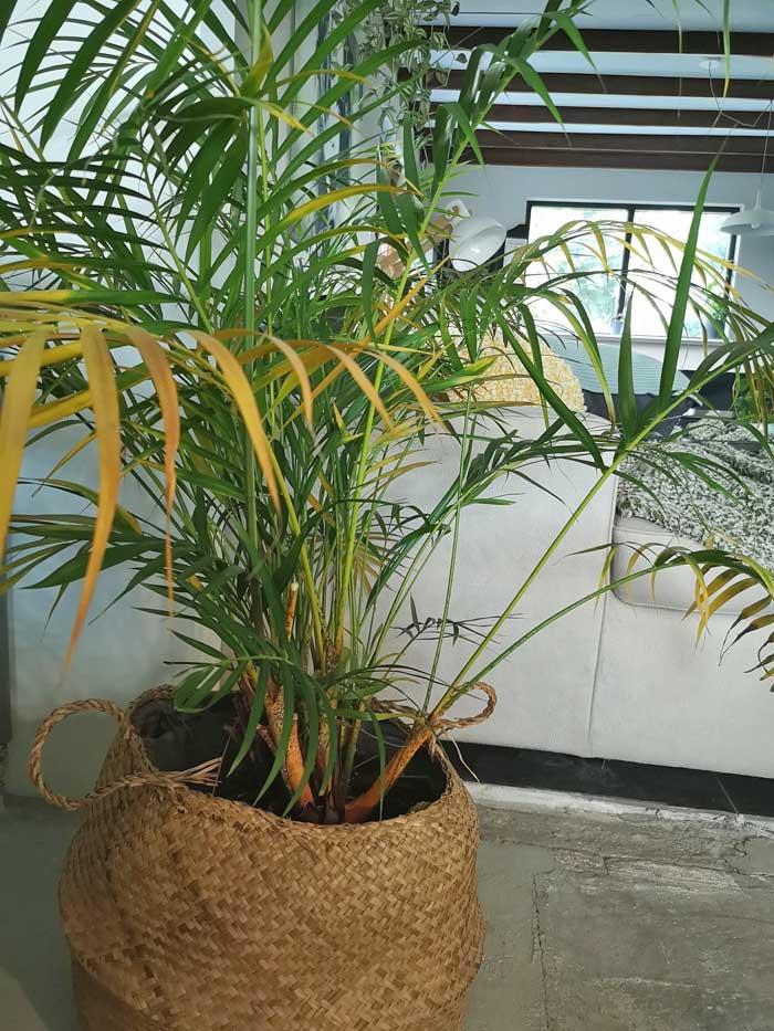 Planten voor buiten